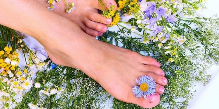 лечении подагры применяются различные лекарственные травы для компрессов
