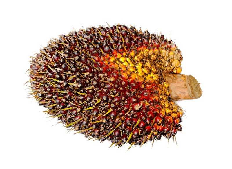 Говоря о пользе и вреде пальмового масла, нельзя не отметить, что данный продукт защищает от сердечных болезней