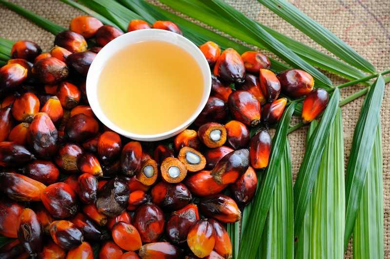 Пальмовое масло относят к растительным маслам