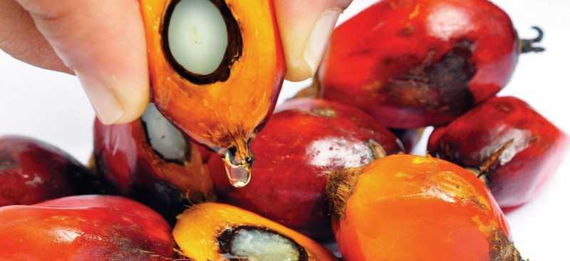Польза пальмового масла для здоровья