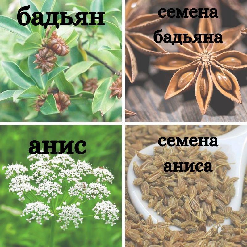 Разница между восточными пряностями – бадьяном и анисом