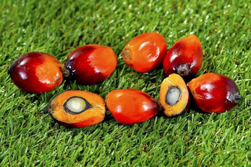 Вред пальмового масла потенциальные риски