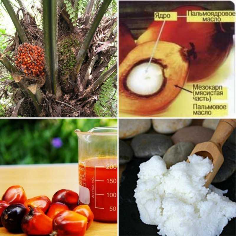 самым ценным является красное пальмовое масло