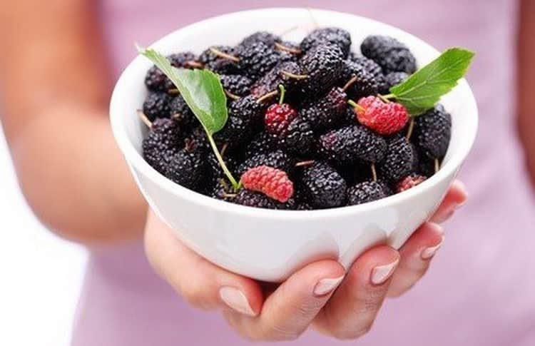 Состав ягоды шелковица