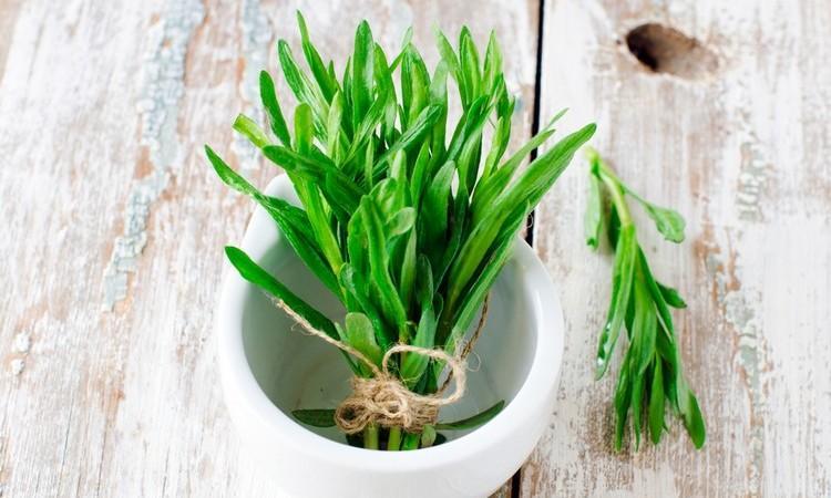 польза и вред травы