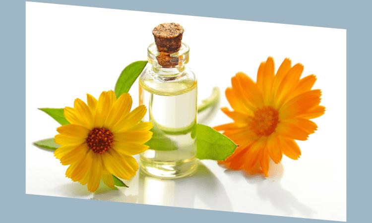 Календула настойка лечебные свойства и противопоказания thumbnail