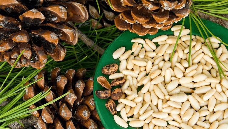 Полезные свойства и противопоказания кедрового ореха_11