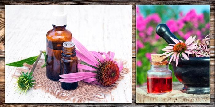 Эхинацея пурпурная при простудных заболеваниях, ОРВИ
