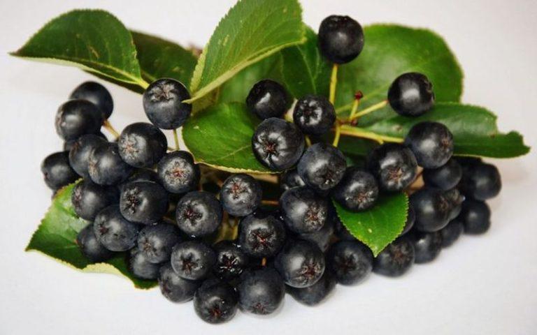 Польза и вред ягод арония черноплодная