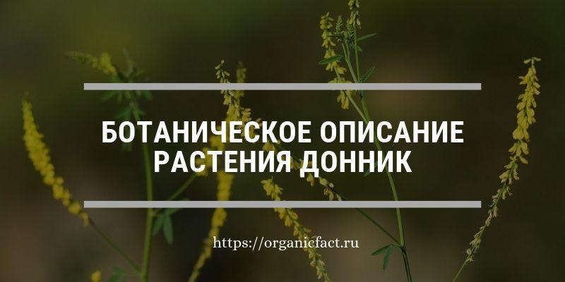 Ботаническое описание растения донник