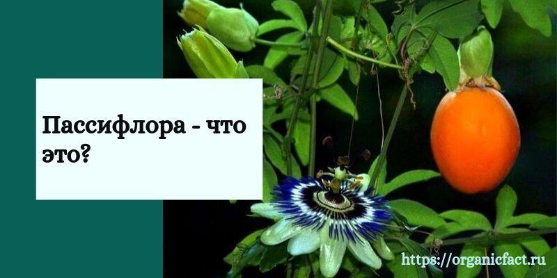 Описание растения пассифлора