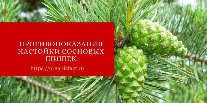 Противопоказания настойки сосновых шишек