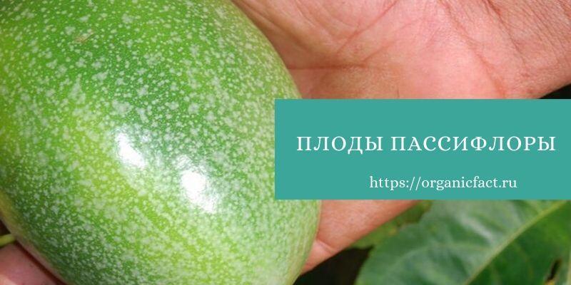плодпассифлоры