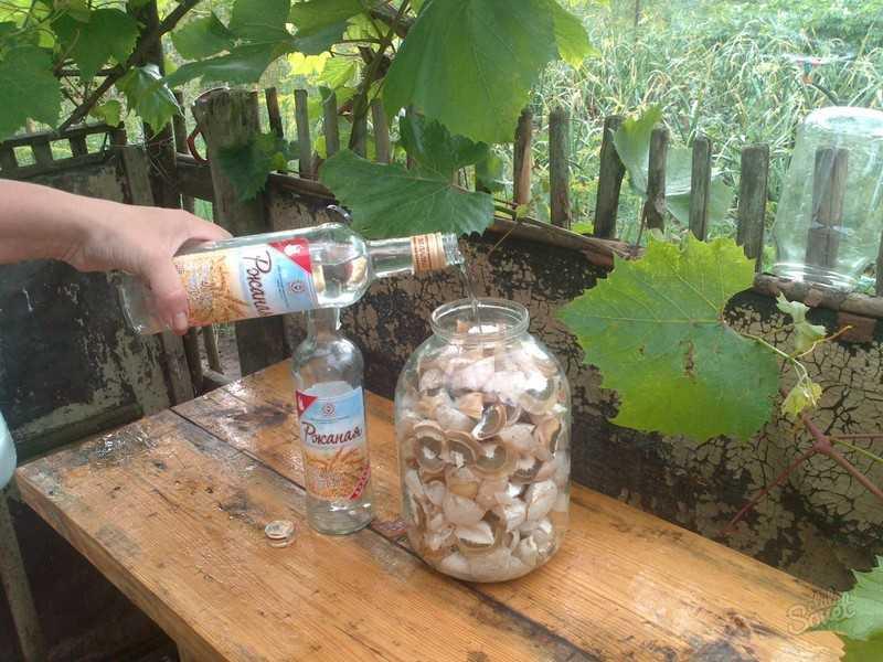 Как приготовить настойку с грибом веселка