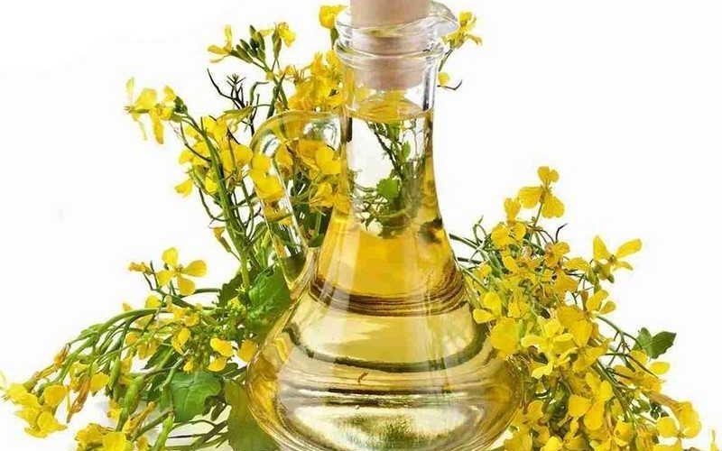 Польза и вред рапсового масла, как применять для похудения и в кулинарии