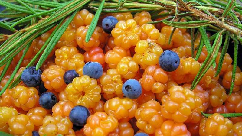 Противопоказания ягоды морошка