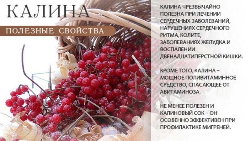 Состав и свойства ягод калины