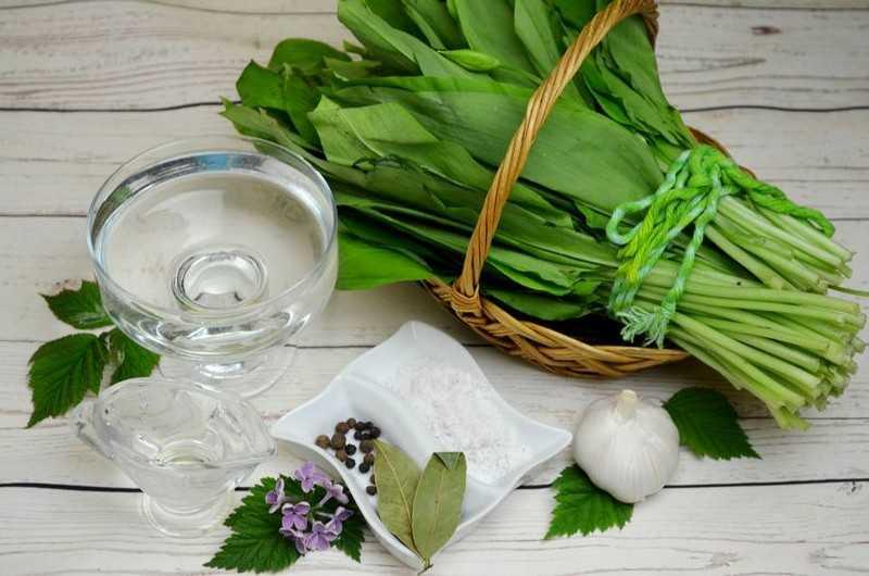Общая польза растения черемша