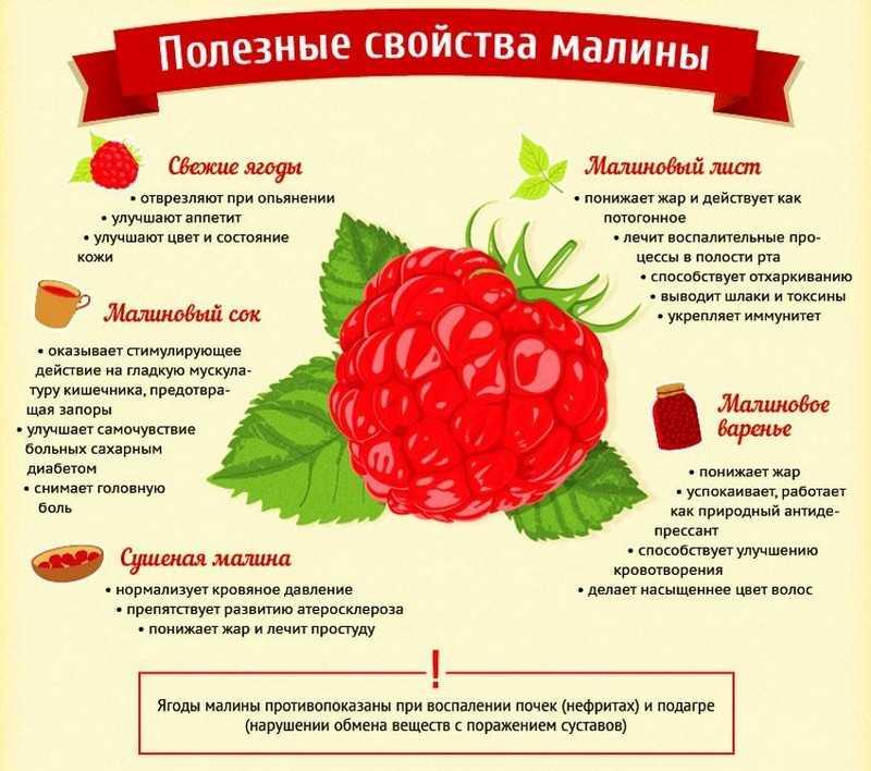 Полезные и лечебные свойства ягоды малина