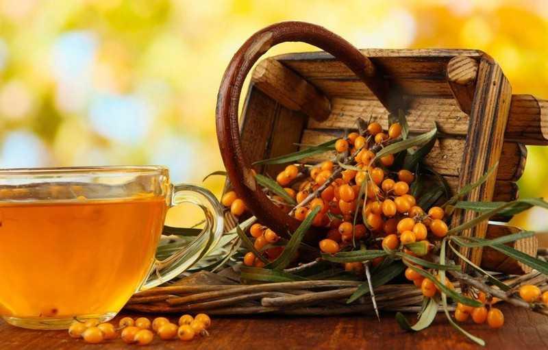 Польза чая из листьев облепихи