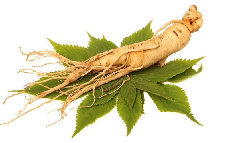 Применение травы и корня женьшеня, свойства