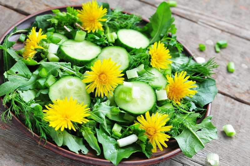 Салат из растения одуванчик лекарственный