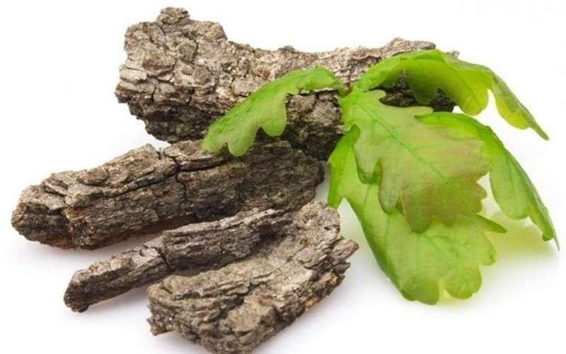 Лечебные свойства и противопоказания коры дуба