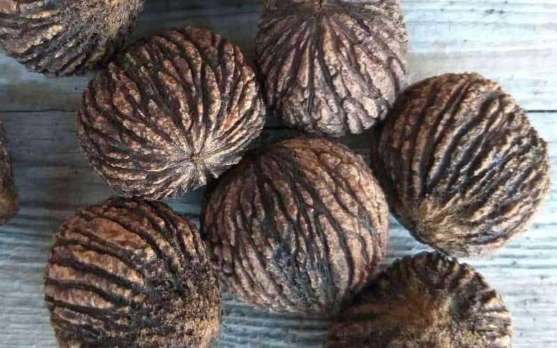Черный орех — применение, свойства, состав, польза, противопоказания