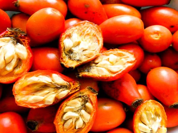 Масло шиповника — свойства, применение, польза, вред