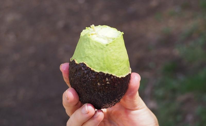 Рецепты омолаживающих масок с авокадо для лица, от морщин вокруг глаз