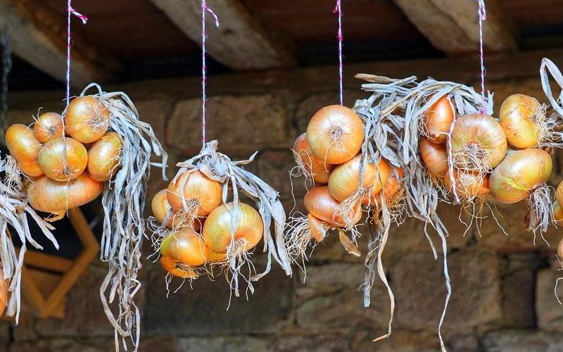 Как выбрать и как хранить репчатый лук